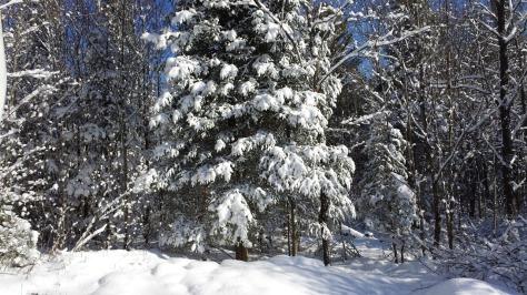 SnowyBirthday03
